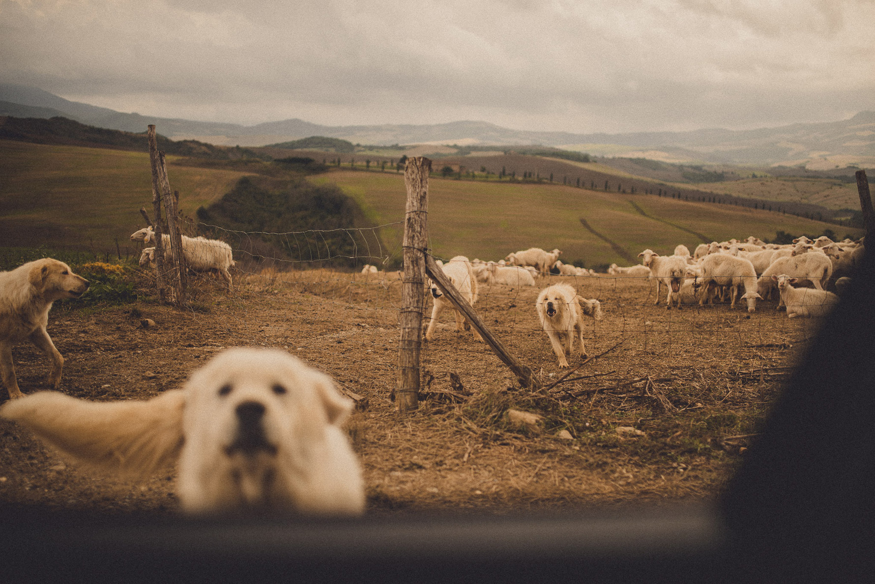 outdoor-rustic-wedding-in-tuscany-countryside-livio-lacurre-photography